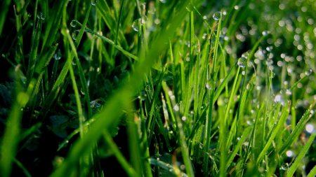 grass, dew, drops