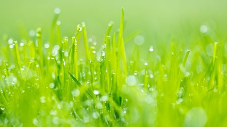 grass, dew, green