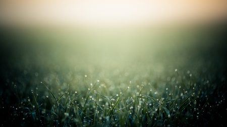grass, drops , background