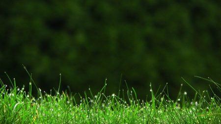 grass, drops, lawn