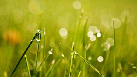 grass, drops, light