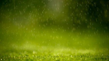 grass, drops, rain
