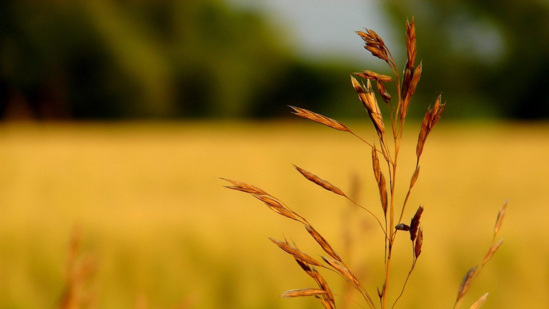 Download Wallpaper 1920x1080 Grass Dry Field Branch Full Hd