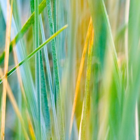 grass, dry, leaves
