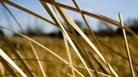 grass, dry, white