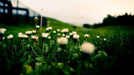grass, field, flowers