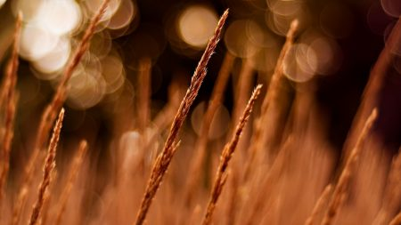 grass, field, glare