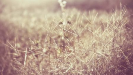 grass, field, light