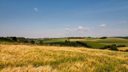 grass, field, open spaces