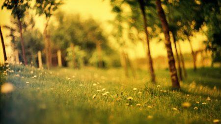 grass, field, summer