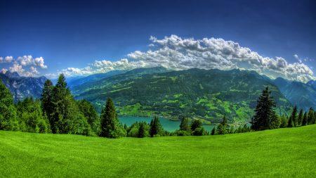 grass, field, trees