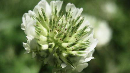 grass, flower, close-up