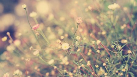 grass, flowers, background