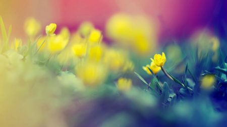 grass, flowers, blurred