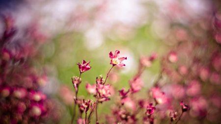 grass, flowers, plants
