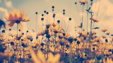 grass, flowers, yellow