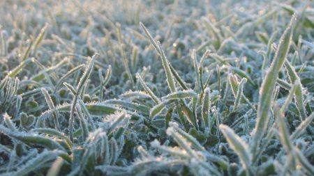 grass, frost, light