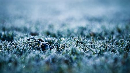grass, frost, surface