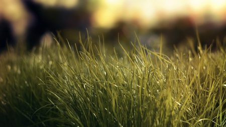 grass, glare, light