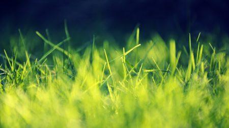 grass, green, bright