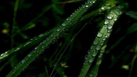 grass, green, drops