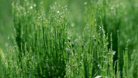 grass, green, light