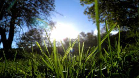grass, greens, sun
