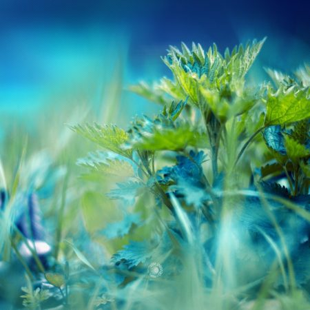 grass, herbs, leaves