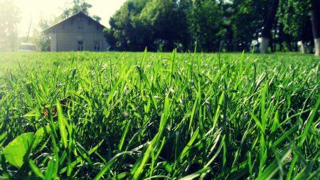 grass, house, summer
