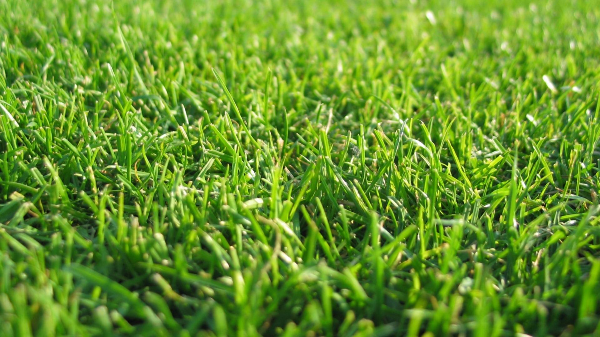 Download Wallpaper 1920x1080 Grass Lawn Green Full Hd 1080p Hd