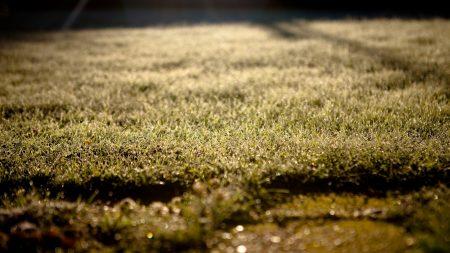 grass, lawn, morning