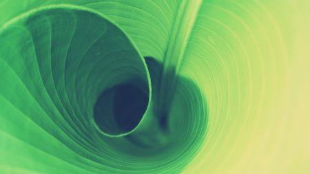 grass, leaf, spiral