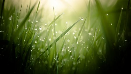 grass, light, background
