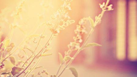 grass, light, bright