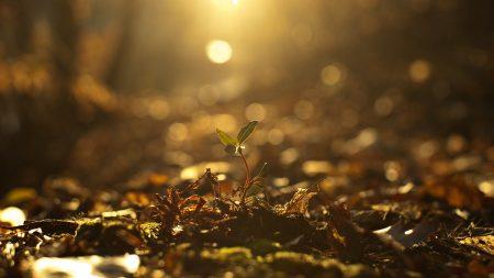 grass, light, glare