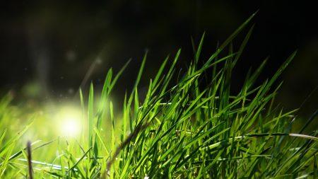 grass, light, shadow