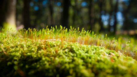 grass, moss, surface