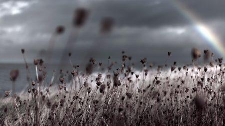 grass, nature, macro