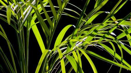 grass, night, leaves