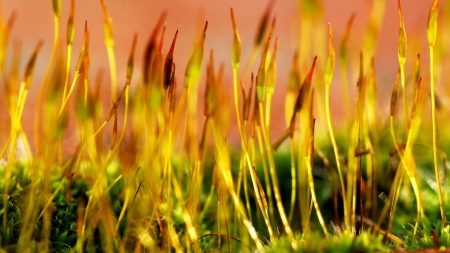 grass, plants, surface