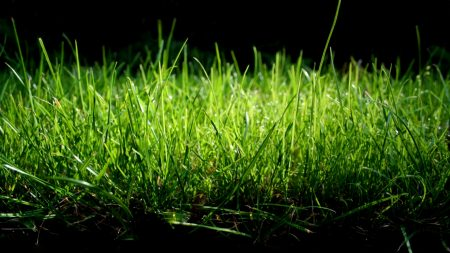 grass, shade, green