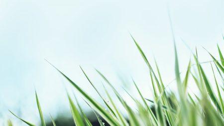 grass, sky, background