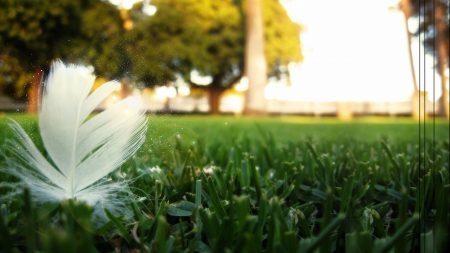 grass, sky, pen