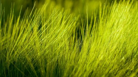 grass, small, field