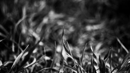 grass, smeared, black white
