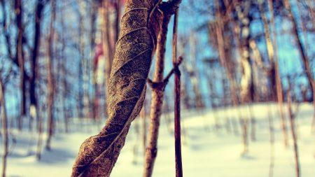 grass, snow, branch