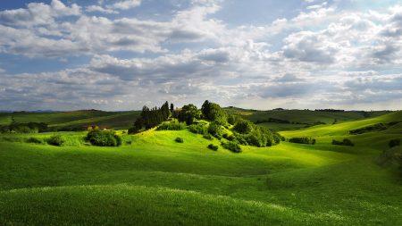 grass, summer, field