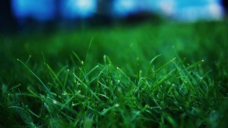 grass, summer, lawn
