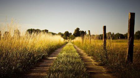 grass, trail, sky