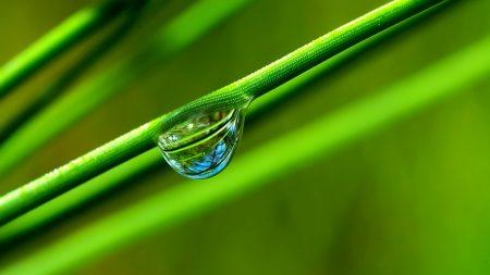 grass, twig, drop